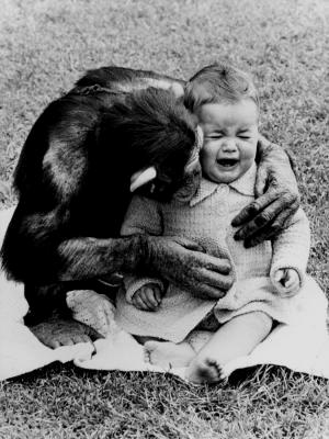 Chimpanzee and Baby